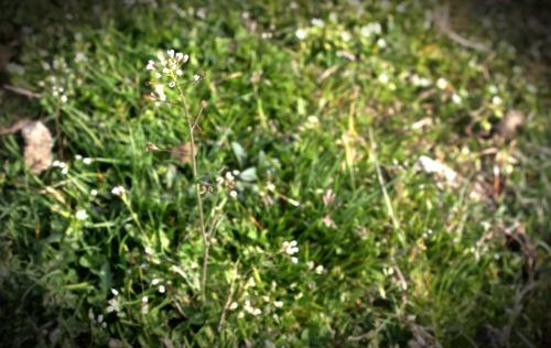 flower_flower